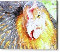 A Curious Hen Acrylic Print