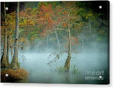 Acrylic Print featuring the photograph A Dancing Cypress by Iris Greenwell