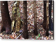 A Dapper Birth In The Midst Of Hemlocks Acrylic Print by Terrance DePietro