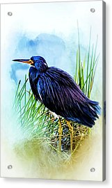 A Day In The Marsh Acrylic Print by Cyndy Doty