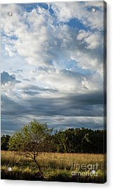 Acrylic Print featuring the photograph A Day In The Prairie by Iris Greenwell