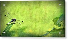A Day In The Swamp Acrylic Print by Mark Fuller