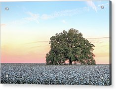 A Deeply Southern Sunrise Acrylic Print by JC Findley