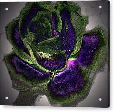 Acrylic Print featuring the photograph A Different Kind Of Rose by Irma BACKELANT GALLERIES