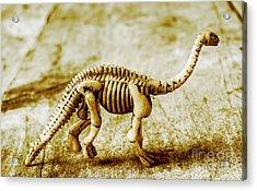 A Diploducus Bone Display Acrylic Print