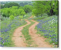 A Dirt Road Lined By Blue Bonnets Of Texas Acrylic Print