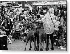 A Dogs Life Acrylic Print