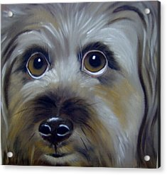 A Dog's Love Acrylic Print