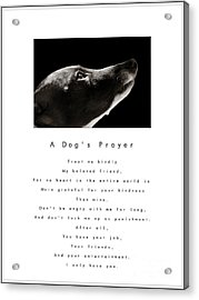 A Dog's Prayer - White Acrylic Print by Angela Rath