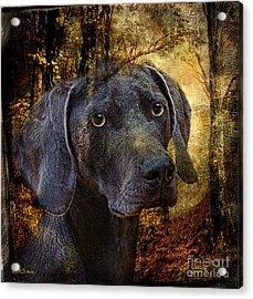 A Dogs Tale Acrylic Print