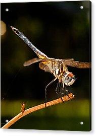 A Dragonfly Acrylic Print