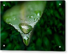 A Drop Acrylic Print by Dan Holm