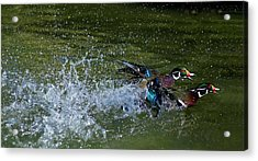 Acrylic Print featuring the photograph A Duck Race by Thanh Thuy Nguyen