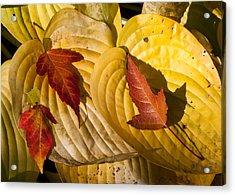 A Fall Contrast Acrylic Print