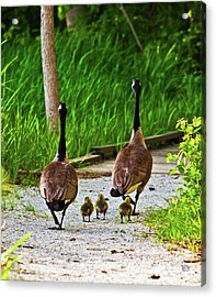 Acrylic Print featuring the photograph A Family Stroll by Edward Peterson