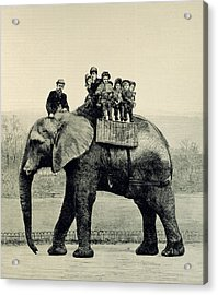 A Farewell Ride On Jumbo From The Illustrated London News Acrylic Print by English School