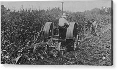 A Farmer Driving A Tractor Acrylic Print by American School