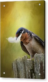 A Feather For Her Nest Acrylic Print