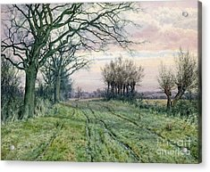 A Fenland Lane With Pollarded Willows Acrylic Print by William Fraser Garden