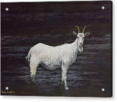 A Feral Goat On The Burren Acrylic Print by Sean Conlon