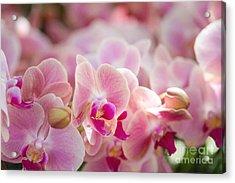 A Field Of Flowers Acrylic Print by A New Focus Photography