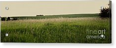 Acrylic Print featuring the photograph A Field Of Grass by Sandy Adams