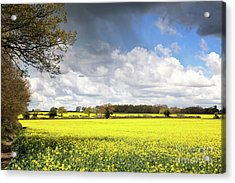 A Field Of Rape Flowers Acrylic Print by Jane Rix