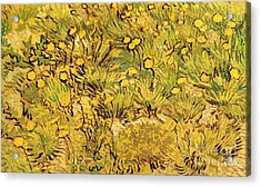 A Field Of Yellow Flowers Acrylic Print