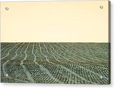 A Field Stitched Acrylic Print