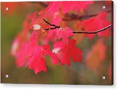 A Flash Of Autumn Acrylic Print