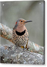 A Flicker Of Sunshine In Winter Acrylic Print