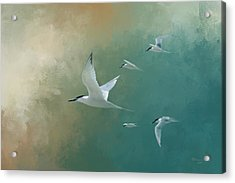 A Flight Of Terns Acrylic Print by Marvin Spates