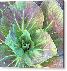 A Floral IIi Acrylic Print by Gary Everson