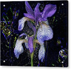 Acrylic Print featuring the photograph A Flower by Vladimir Kholostykh