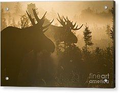 A Foggy Morning Acrylic Print by Tim Grams