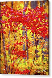 A Forest On Fire Ap Acrylic Print