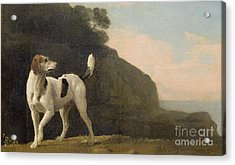 A Foxhound Acrylic Print by George Stubbs