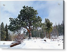 Acrylic Print featuring the photograph A Fresh Blanket Of Snow by Shane Bechler