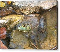 A Frog Of A Prince Acrylic Print