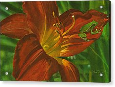 A Frog On A Lily Acrylic Print