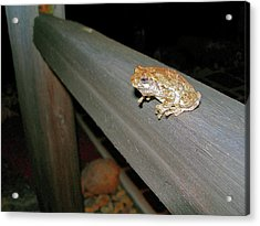 Acrylic Print featuring the photograph A Frog Went A Courting by Randy Rosenberger