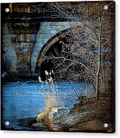 A Frozen Corner In Central Park Acrylic Print