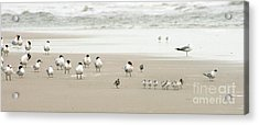 A Gaggle Of Seabirds Acrylic Print by Angela Rath