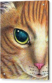 A Ginger Cat Face Acrylic Print
