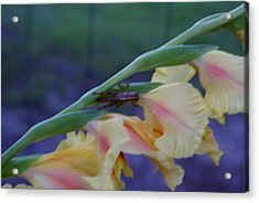 A Glad Hopper 3 Acrylic Print by Debbie May