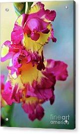 A Gladiolus 3 Acrylic Print
