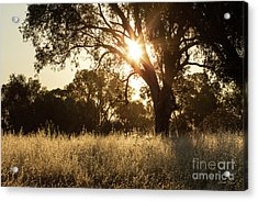 Acrylic Print featuring the photograph A Golden Afternoon by Linda Lees