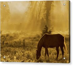 A Golden Moment Acrylic Print by Ron  McGinnis