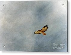 A Good Day To Fly Acrylic Print by Krista-