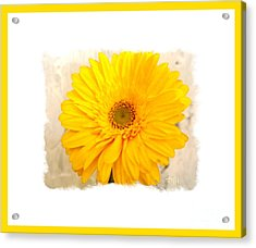 Acrylic Print featuring the photograph A Grand Yellow Gerber by Marsha Heiken